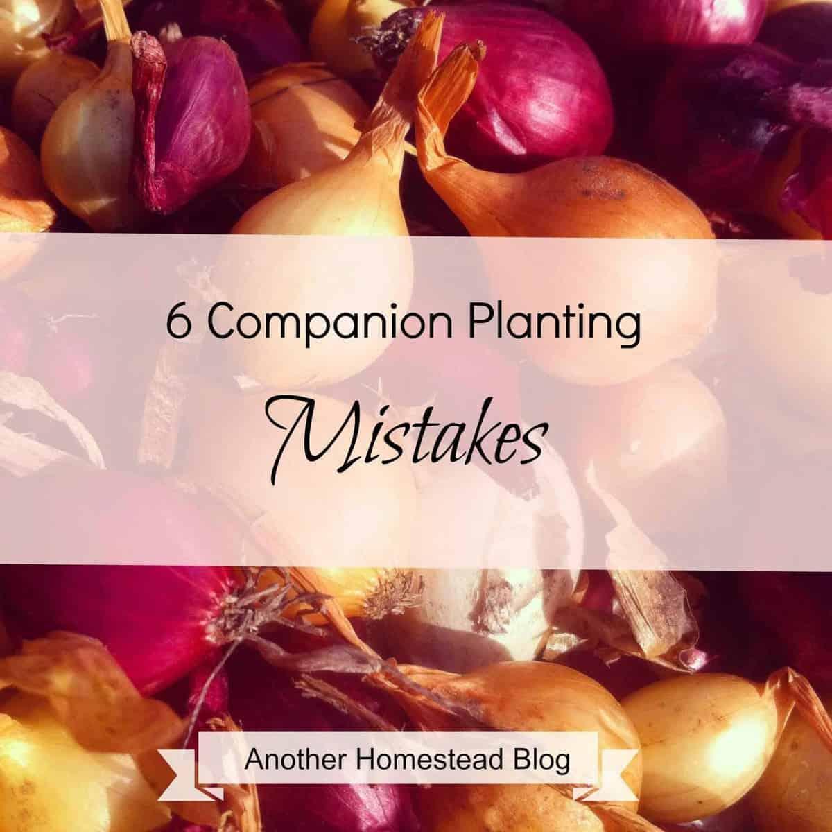 6 Companion Planting Mistakes to Avoid – FREE Printable!