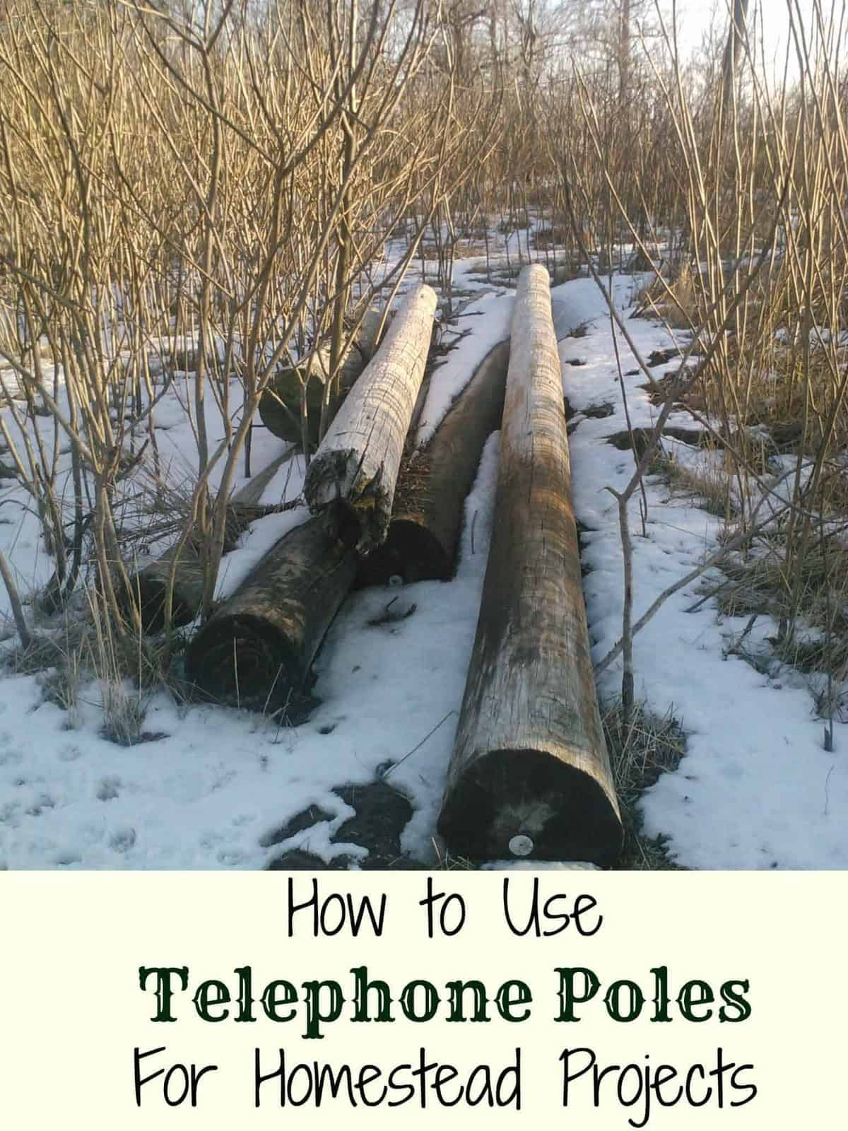 5 Ways to Use Telephone Poles on the Homestead