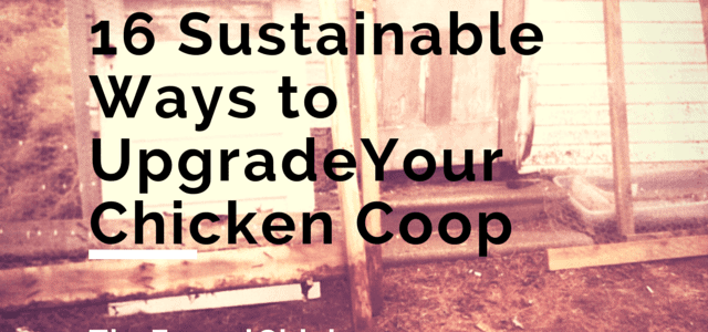 16 Sustainab;e Ways to Upgrade Your Chicken Coop