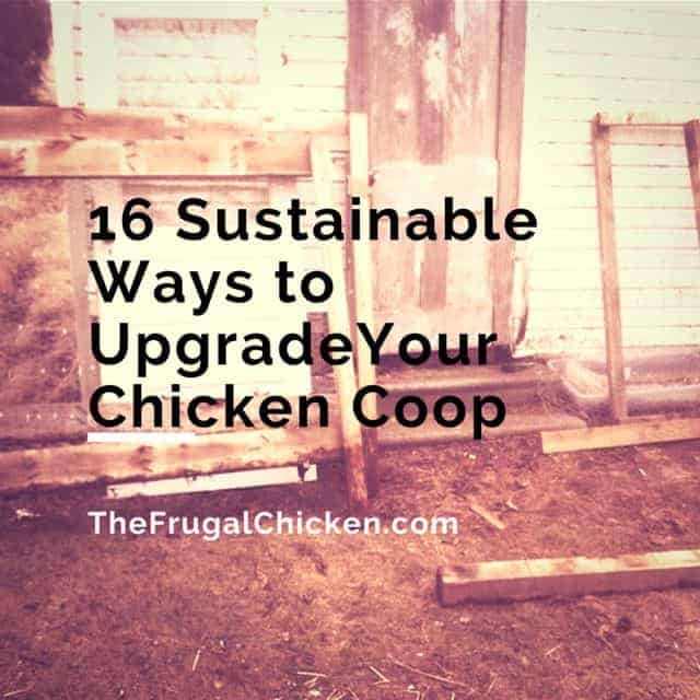 16 Sustainable Ways to Upgrade Your Chicken Coop