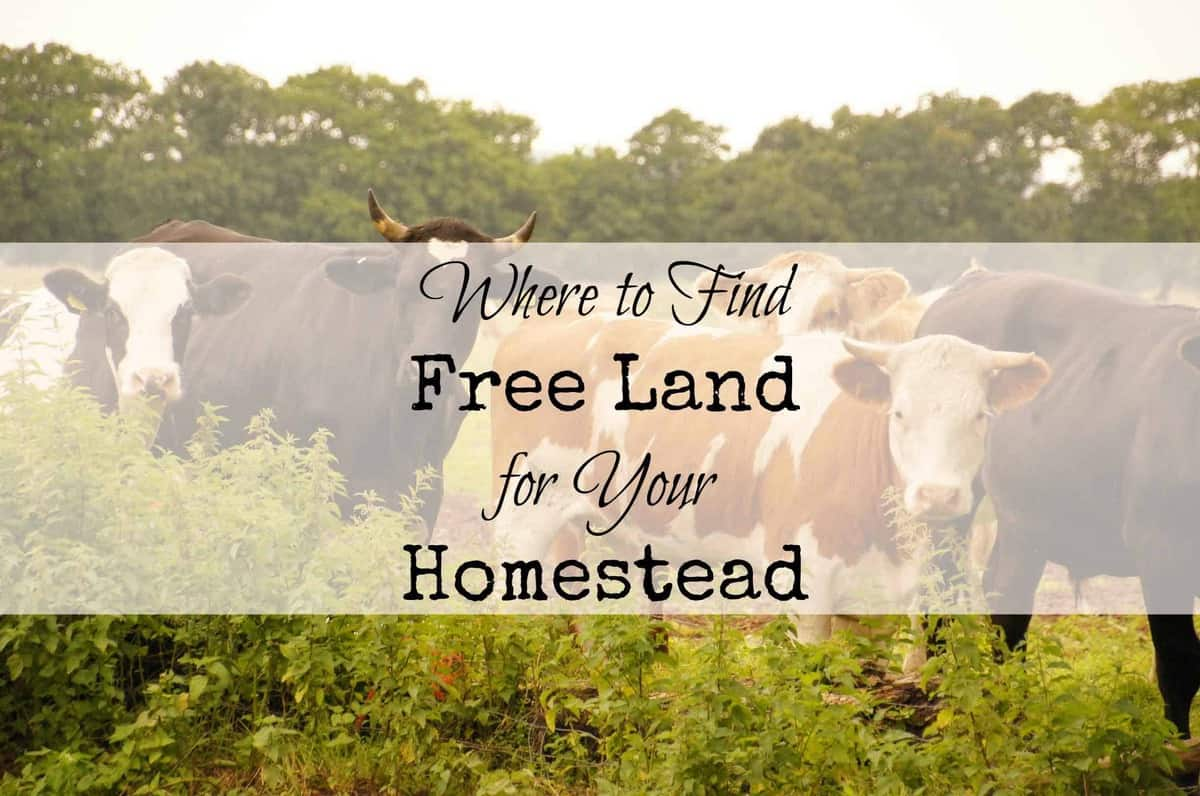 If you're looking for free land to start a homestead, this article will tell you where to find free land, and exactly how to apply for it. From FrugalChicken