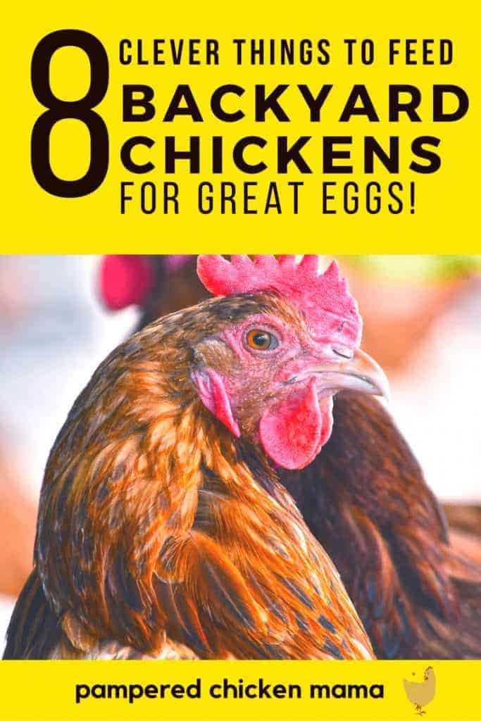Want your hens to lay great tasting chicken eggs? Here's how you should be feeding them!
