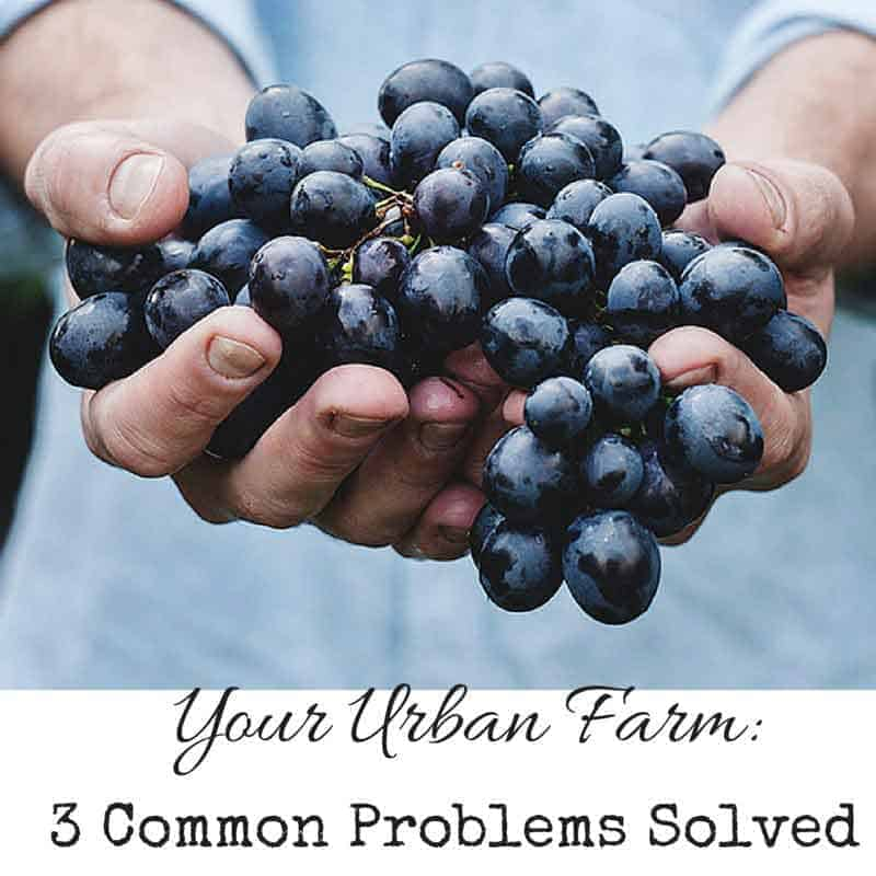 The Urban Farm: 3 Common Problems Solved