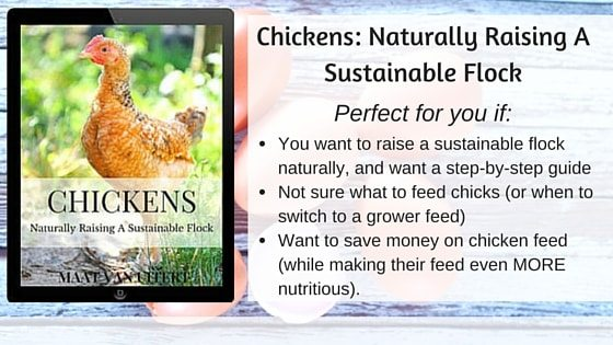 Chickens- Naturally Raising A Sustainable Flock AD (2)-min