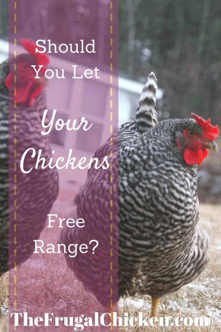 Should You Let Your Chickens Free Range?