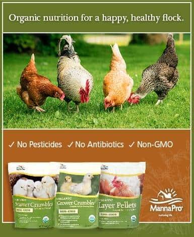 385x470 Organic Ad Frugal Chicken
