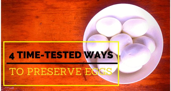 Have too many eggs to eat? Want to preserve them for winter but not sure how? Here's 4 time tested, surefire ways to preserve eggs, complete with directions. From FrugalChicken