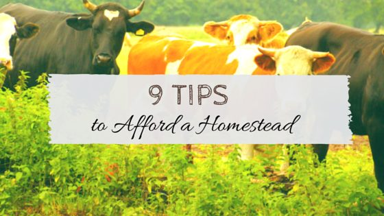 9 Tips to Afford a Homestead. Think you can't afford a homestead? Think again! Here's 9 tips! From TheFrugalChicken.com