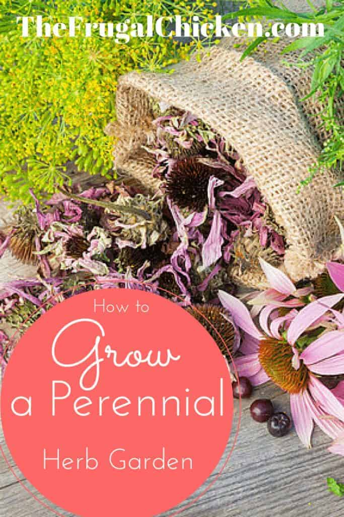 How to Grow A Perennial Herb Garden. Get a garden that grows year after year! Here's how to do it and what you'll need! From FrugalChicken