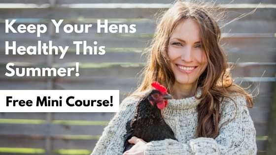Keep Your Hens Healthy This Summer-min