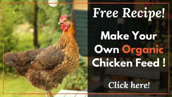 Organic Homemade
