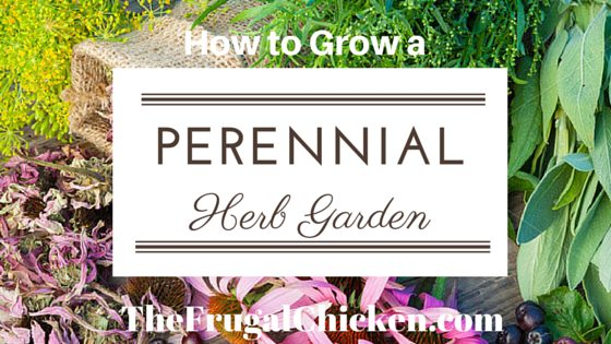 How to Grow A Perennial Herb Garden. It's a simple luxury that's easy to grow. Here's how to do it, and what you'll need. From FrugalChicken