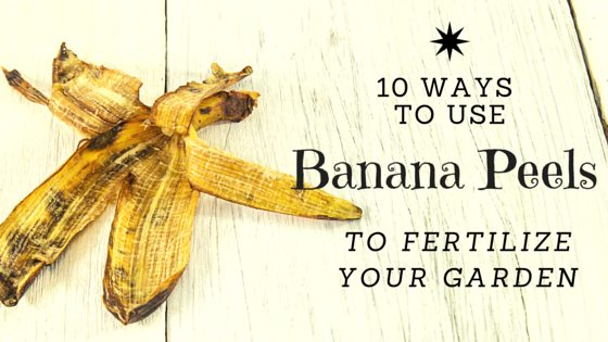 10 Ways To Use Banana Peels In Your Garden As Fertilizer