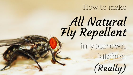 Want a natural alternative to chemical-filled bug sprays? Here's a recipe for natural fly repellent you can make in your own kitchen - today. From FrugalChicken
