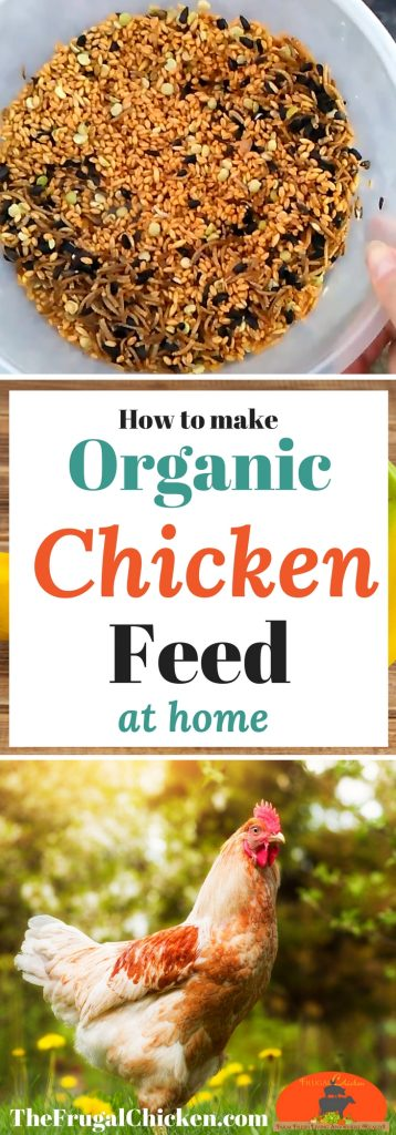 Organic Homemade Chicken Feed Recipe That Wont Break The Bank