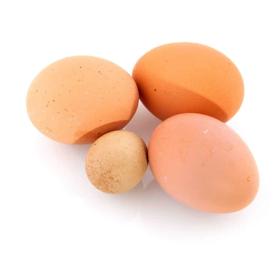 abnormal chicken eggs what you need to know frugal chicken