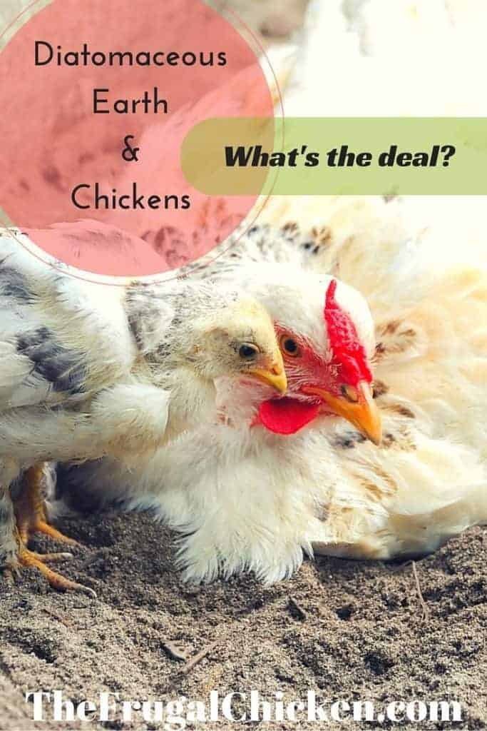 Ever since we started offering diatomaceous earth to our chickens, they've been so much healthier. Here's what it is and how to use it in the coop!
