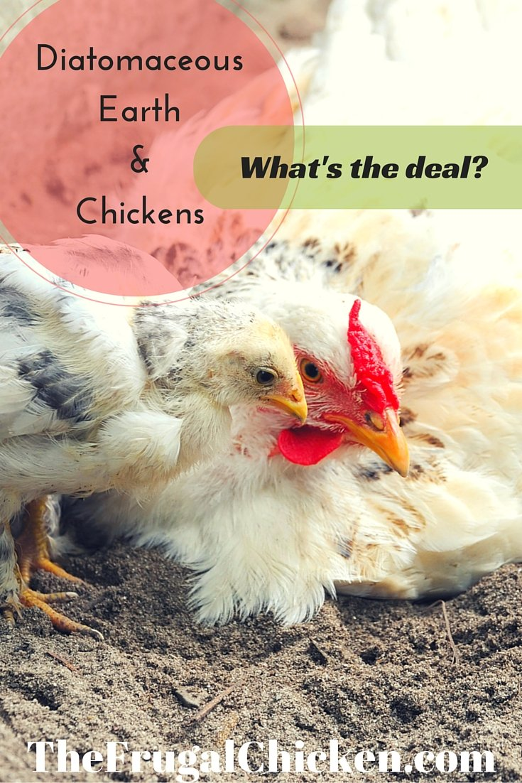 Diatomaceous Earth & Chickens: What's The Deal? | Pampered