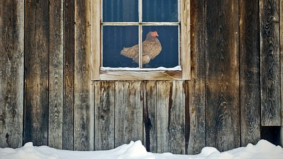 Don't make these mistakes preparing your chicken coop for winter! You'll learn 5 things you should do - and what NOT to do! From FrugalChicken