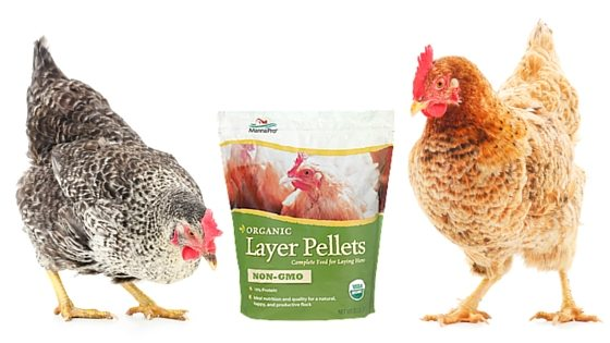 Enter To Win A Bag Of Manna Pro Organic Non-GMO Layer Pellets – 3 Up for Grabs Starting October 15!