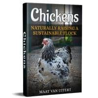 Chickens Naturally Raising A Sustainable Flock