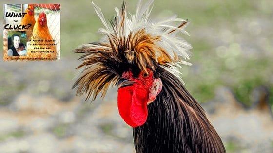 Chicken 911! Chicken Emergencies And Preparedness [Podcast]