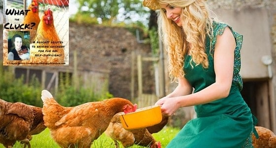 Who doesn't want to save money on chicken feed? In this session of What The Cluck?! we look at 8 ways I save money on chicken feed on our homestead. From FrugalChicken