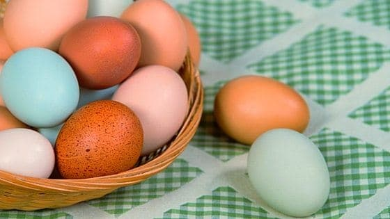 Curious about how different colored eggs are made? Do you know why all eggs are either truly white or blue? In this article, you'll learn how chickens make different colored eggs, how their color is determined, and why every egg out there is either blue or white. From FrugalChicken.