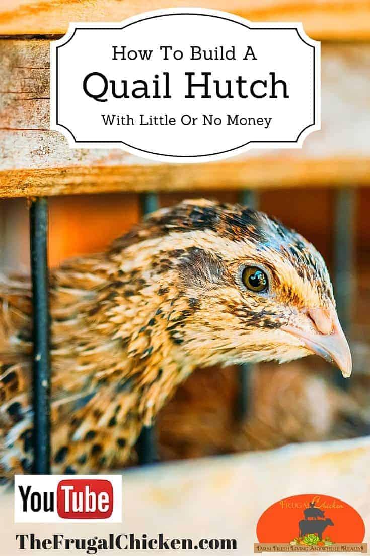 build a quail hutch