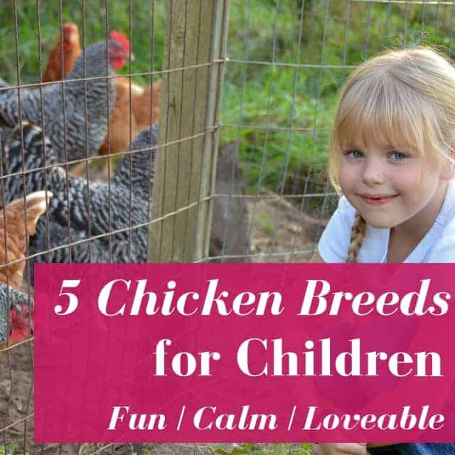 Chicken Breeds For Children [Podcast]