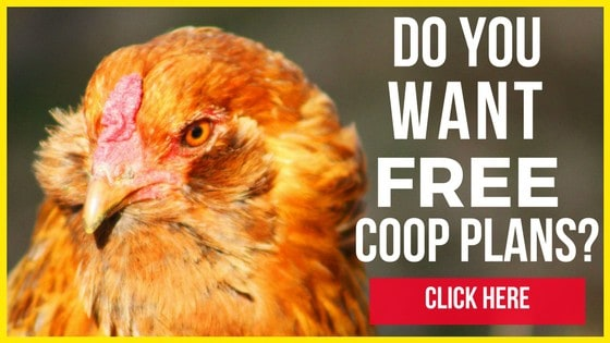 On Our Homestead We Have More Than One Chicken Coop
