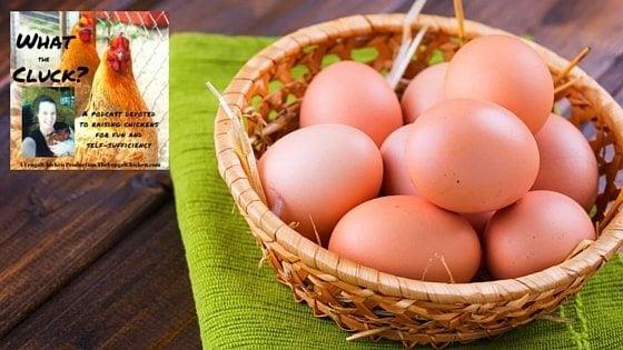 weird chicken eggs feature