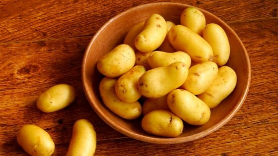 If you don't know how to grow potatoes in containers, but want to harvest bucketfuls anyway, then this article is for you.
