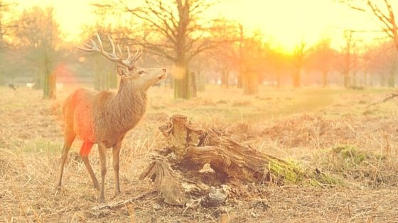 Is Hunting For A Winter Meat Supply For You?