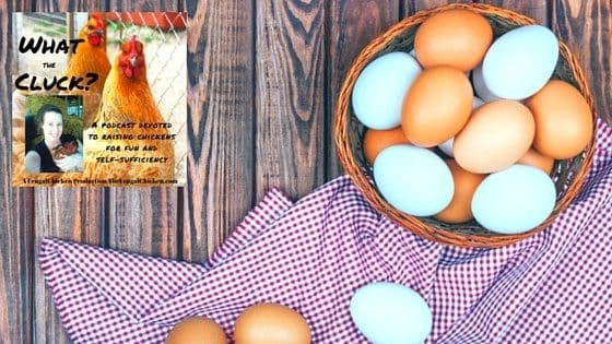 What Kind Of Chickens Lay Blue Eggs (Or Green...Or Olive...)? [Podcast]