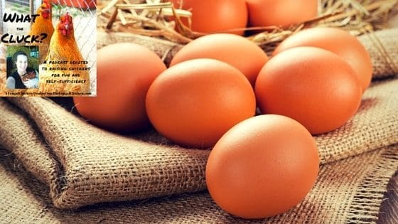 Is My Hen Laying Yet?! Decoding Her Tell-Tale Signs (Plus Ideas To Use & Preserve Eggs) [Podcast]