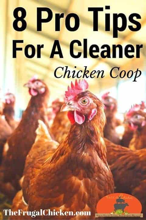 How To Clean Your Chicken Coop [Podcast] | Pampered Chicken Mama
