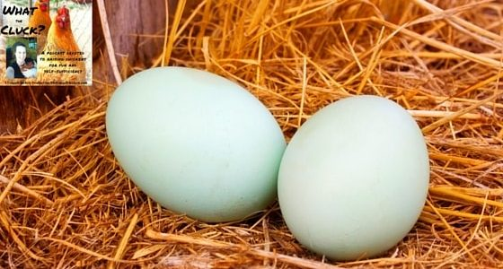 If you're not feeding these basic pantry staples to your hens, you're missing out on healthier eggs. These yield big results for your own health!!