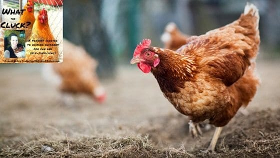 3 Shockingly Common Myths About Feeding Chickens That Prevent YOU From Being Healthier [Podcast]