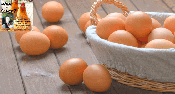 why chickens lay weird eggs