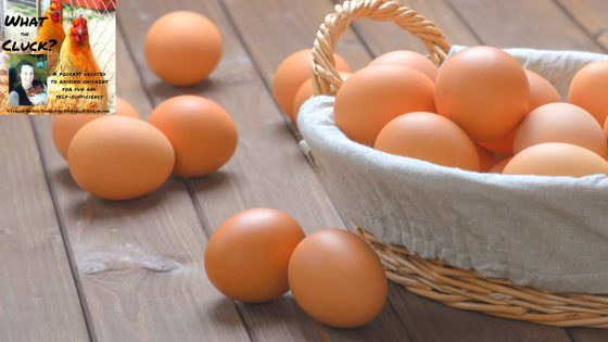 Why Backyard Chickens Lay Weird Looking Eggs & What To Do About It [Podcast]