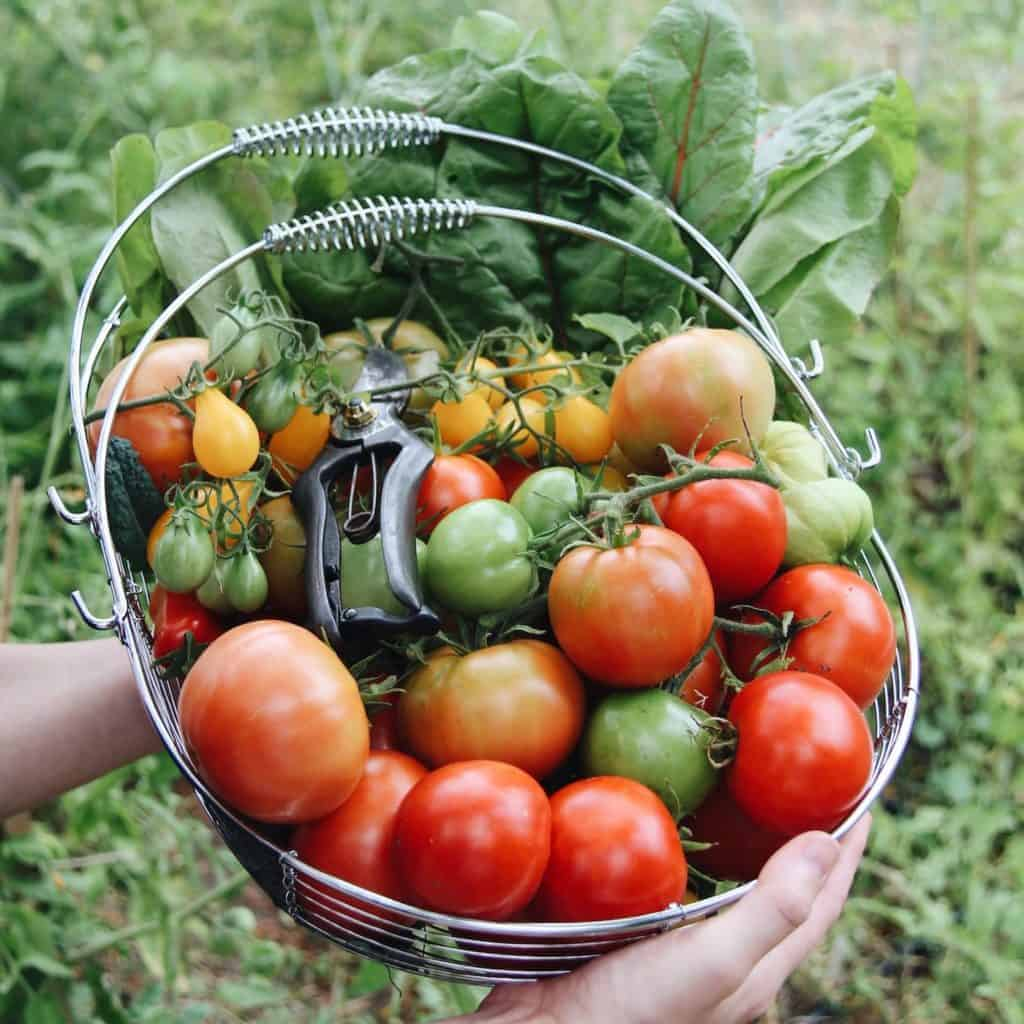 5 vegetables you can grow to save money on your groceries