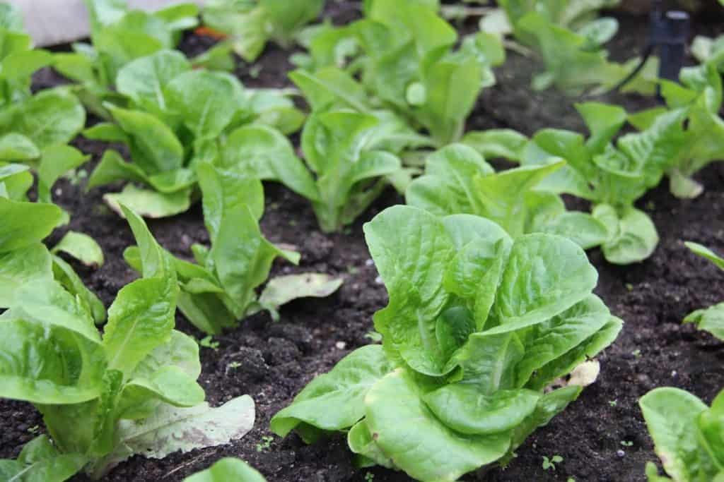 5 vegetables you can grow to save on your grocery bill