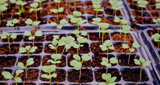 what seedlings can you start in February?