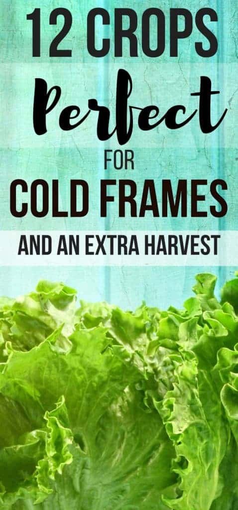 Great vegetable gardens for beginners ideas! 12 crops you can grow in cold frames for raised beds. Cold frames gardening just got easier!