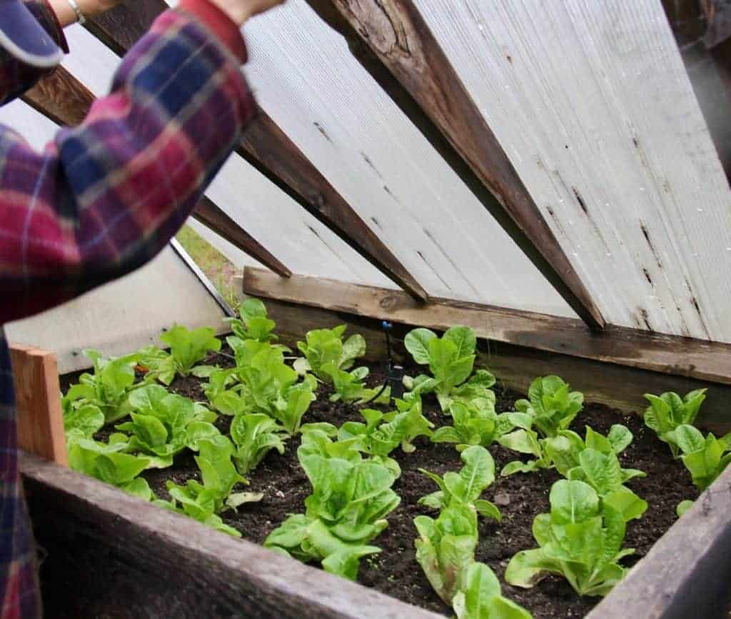 How to grow a garden even if you don't have a green thumb