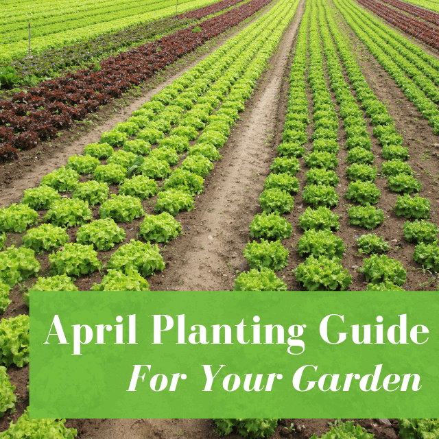 What To Do In Your Garden In April [Planting Guide]
