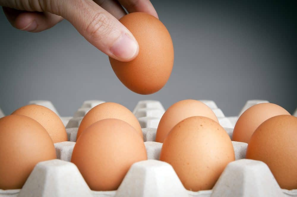 Store Chicken Hatching Eggs Like A Pro With These Tips!