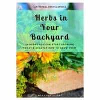 Herbs in Your Backyard