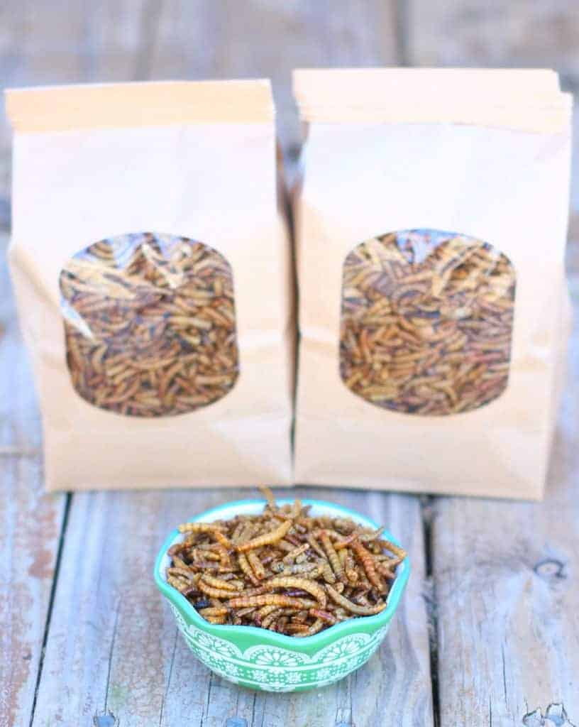 Raise Mealworms for Your Chickens is easy with this guide!